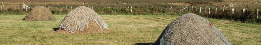Hay Reeks Meadow